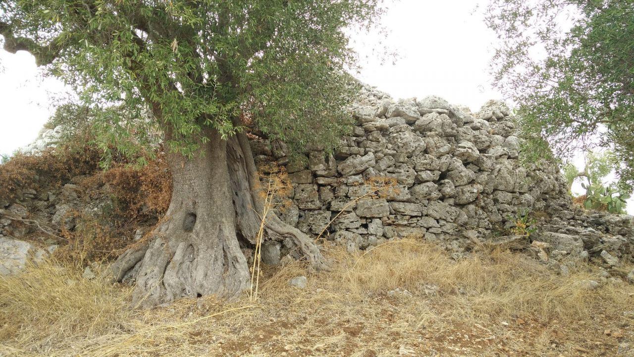 Specchia-Castelluzzo-Torre-Megalitica-Ciclopica-Ceglie-Messapica-Brindisi-Puglia-Italia-1