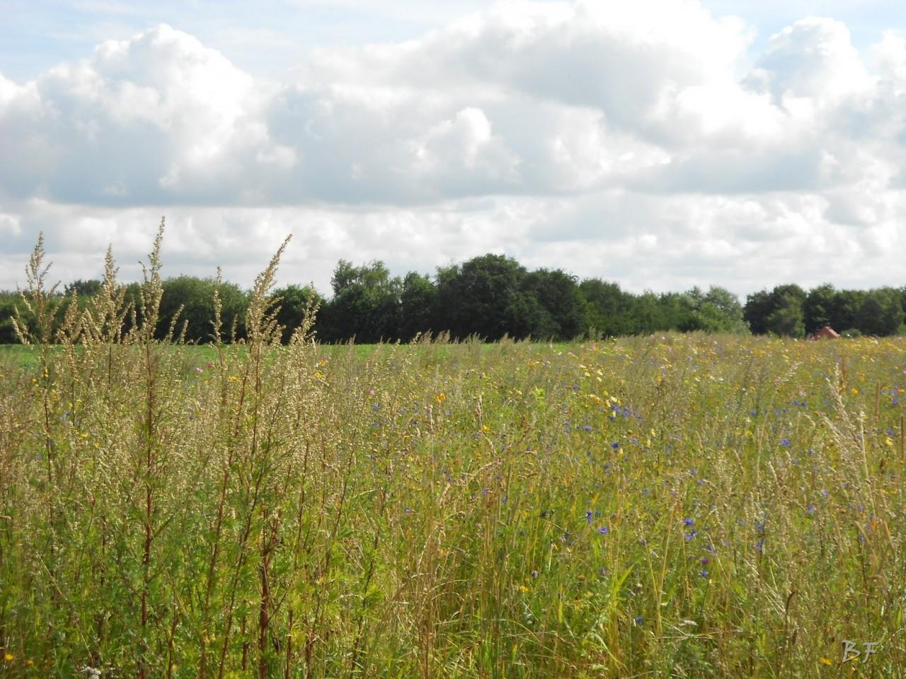 Hunebedden-Dolmen-Megaliti-Groeningen-Drenthe-Paesi-Bassi-37