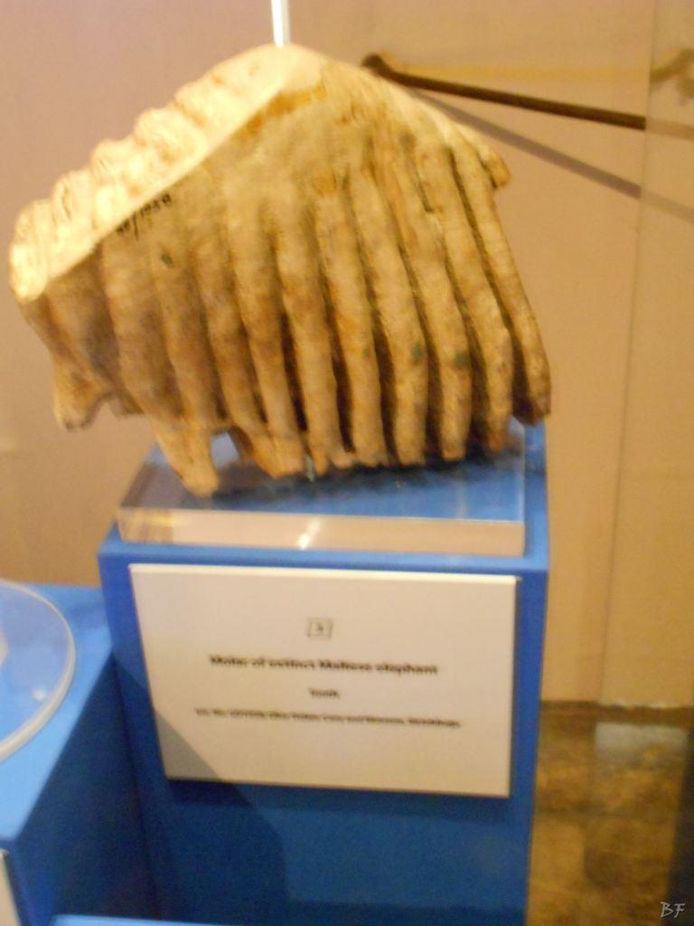 La-Valletta-Museo-Archeologia-Malta-54
