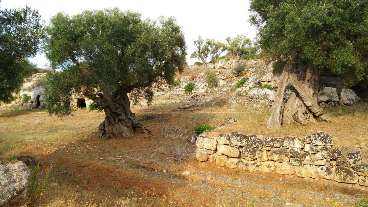 Insediamento-rupestre-Lamacornola-Ostuni-Brindisi-Salento-Puglia-Italia-25