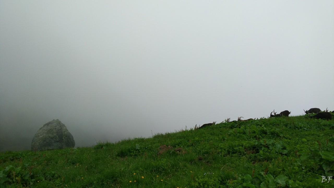 Lago-Monastero-Lanzo-Torino-Menhir-77