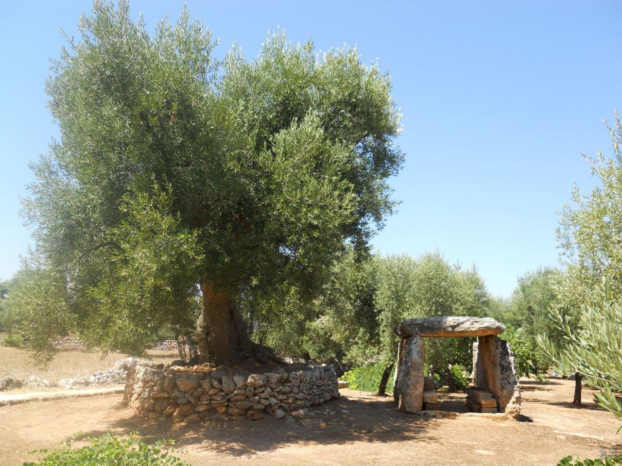Dolmen-Montalbano-Fasano-Ostuni-Megaliti-Salento-Brindisi-Puglia-Italia-2