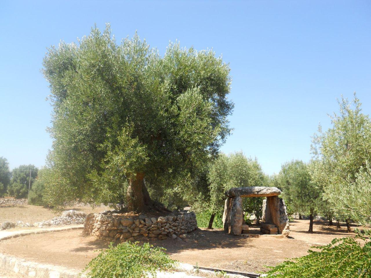 Dolmen-Montalbano-Fasano-Ostuni-Megaliti-Salento-Brindisi-Puglia-Italia-3