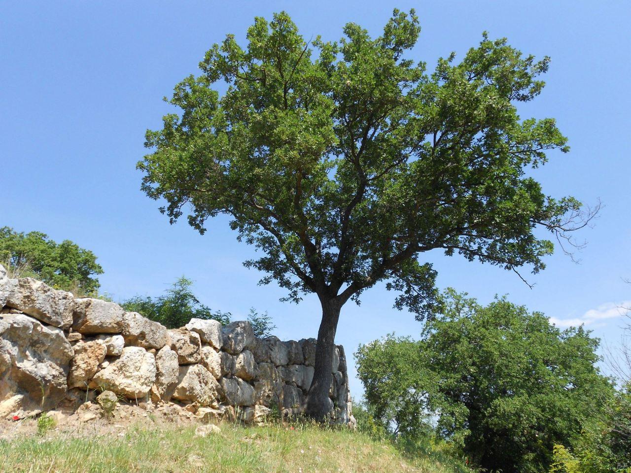 Roselle-Mura-Megalitiche-Roselle-Grosseto-Toscana-Italia-2