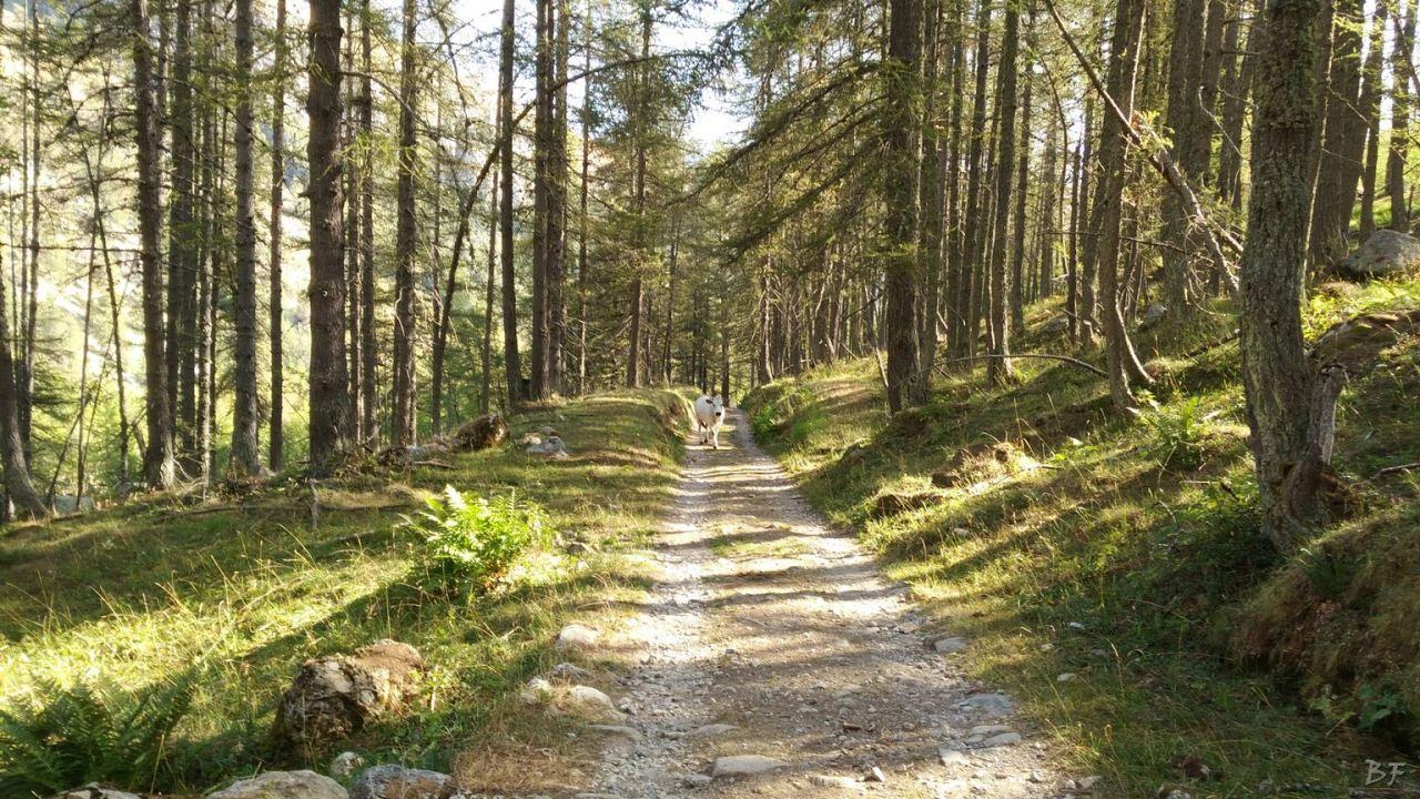 Valle-delle-Meraviglie-Incisioni-rupestri-Tenda-Alpi-Marittime-Francia-15