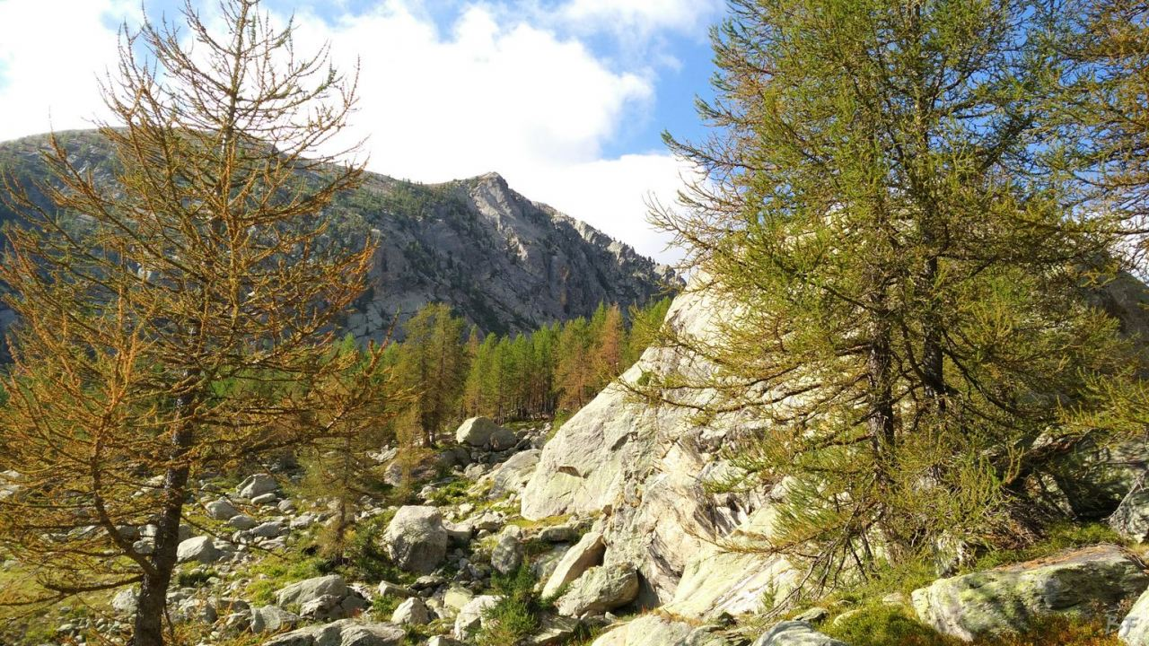 Valle-delle-Meraviglie-Incisioni-rupestri-Tenda-Alpi-Marittime-Francia-22