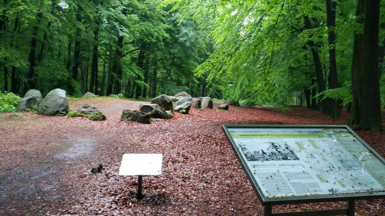 Cromlech-Visbeker-Brautigam-Visbek-Bassa-Sassonia-Germania-16